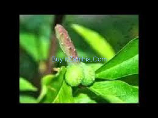 the  international herbal clinic for penis enlargement.+27782669503